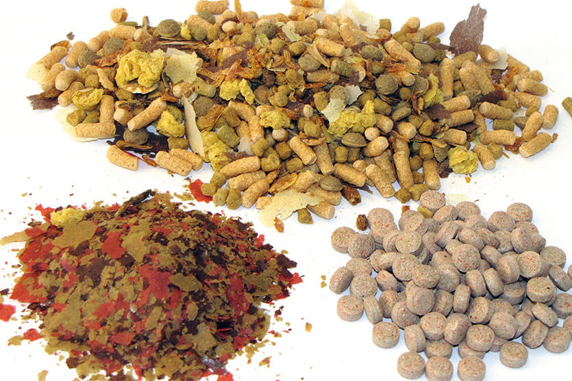 Pet food pet treats fish feed coperion for How to make fish food